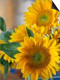 Sunny Sunflower II Art by Nicole Katano