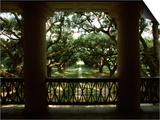 Oak Trees in Front of a Mansion, Oak Alley Plantation, Vacherie, Louisiana, USA Prints