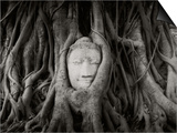 Buddha Head in the Roots of a Tree, Wat Mahathat, Ayutthaya Historical Park, Ayutthaya, Thailand Print by  Panoramic Images