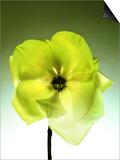 Green Magnolia Blossom Prints by  Monzino