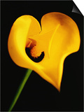 A Yellow Lily with an Arrow as the Stigma Prints by Abdul Kadir Audah