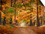 Horse Running across Road in Fall Colors Prints by  Panoramic Images