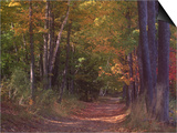 Autumn Trees in Vermont Art by Sally Brown