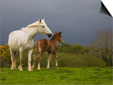 Mare and Foal, Co Derry, Ireland Posters