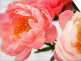 Delicate Blossom II Prints by Nicole Katano