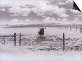Longhorn Steer, CO Kunstdrucke von Chris Rogers
