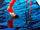 Flamingo, Florida Posters by Pat Canova