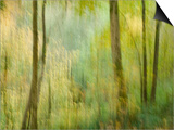 Impression of an Autumn Forest, North Lanarkshire, Scotland, UK, 2007 Prints by Niall Benvie
