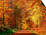Autumn Way Prints by Philippe Sainte-Laudy