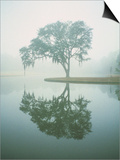 Louisiana, Oak Tree with Reflection Prints by Ken Glaser