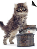 Domestic Kitten (Felis Catus) on Basket with Another Kitten Inside It Posters by Jane Burton