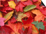 Fall Leaves Prints by Robert Houser