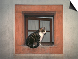 Cat Sitting on a Window Ledge Poster by Diane Miller