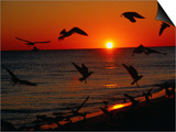 Seagulls FLying Over the Beach at Sunset, FL Prints by Ken Glaser