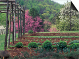 Vegetable Garden at Monticello, Thomas Jefferson's Home in Charlottesville, Virginia Posters