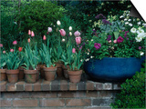 Spring Flowers and Tulips in Pots Print by Charles Benes