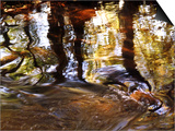 Trees Reflected in Oak Creek, Sedona, Arizona, USA Prints by Margaret L. Jackson