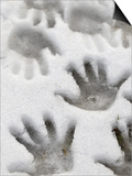 Children's Handprints in a Spring Snow Prints by John Nordell