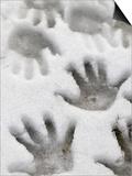 Children's Handprints in a Spring Snow Prints by John Nordell