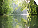 Spreewald Canal Reflection, an Area of Old Canals in Woods Prints by Diane Miller