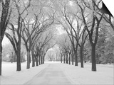 Winnipeg Manitoba, Canada Winter Scenes Prints by Keith Levit