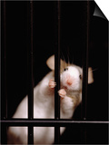 Mouse Behind Bars Poster by Rudi Von Briel