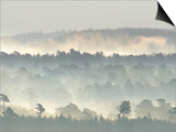 Ancient Pine Forest Emerging from Dawn Mist, Strathspey, Scotland, UK Prints by Pete Cairns