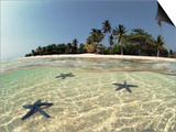Three Seastars in Shallow Coastal Waters, Philippines, Split- Level Shot Posters by Jurgen Freund