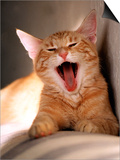 Cat Yawning Art by Fabrizio Cacciatore