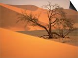 Tree in Namibia Desert, Namibia, Africa Posters by Walter Bibikow