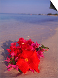 Hibiscus and Bouganvilla on Beach, Cayman Islands Prints by Anne Flinn Powell