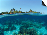 Split-Level Shot of Coral Reef and Shore, Phillippines Prints by Jurgen Freund