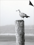 White Seagull on Post, Cape Cod Prints by Steven Emery