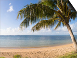 Palm Trees on the Beach, Anini Beach, Kauai, Hawaii, USA Posters by  Panoramic Images