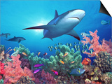 Low Angle View of a Shark Swimming Underwater, Indo-Pacific Ocean Art