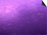 Purple Rain Prints by Philippe Sainte-Laudy
