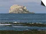 Bass Rock Gannetry, from the North Berwick Shore, East Lothian, Scotland, United Kingdom Posters by Roy Rainford