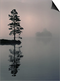 Lone Scots Pine, in Mist on Edge of Lake, Strathspey, Highland, Scotland, UK Prints by Pete Cairns