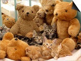 Domestic Cat, Five Kittens in Cot with Teddy Bears Prints by Jane Burton