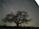 Star Trails, 20 Minutes Exposure Time, Pusztaszer, Hungary Art by Bence Mate