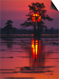 Cypress Swamp at Sunrise, Texas, USA Posters by Diane Miller