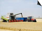 Combine Harvester Unloading Grain into Trailer, England Plakater af Martin Page