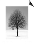 Winter Tree Print by Ilona Wellman