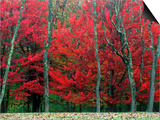 Autumn in West Virginia Prints by Robert Finken
