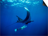 Diver Swims with Giant Manta Ray, Mexico Prints by Jeffrey Rotman