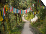 Path and Prayer Flags, Mcleod Ganj, Dharamsala, Himachal Pradesh State, India Prints by Jochen Schlenker