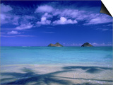 Shadow of Palm Trees on Lanikai Beach, Oahu, HI Posters by Tomas del Amo