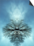Tree Reflected in Water and Surrounded by Clouds Posters by Chris Rogers