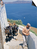 Animal Transport, Santorini (Thira), Cyclades Islands, Greek Islands, Greece Posters by Michael Short
