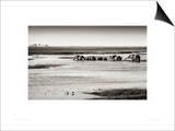Chobe River Botswana Prints by Philippe-Alexandre Chevallier